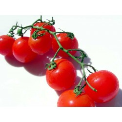 Био чери домати 250g клонка