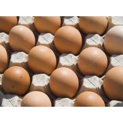 Яйца L 10бр. ПОДОВО ОТГЛЕЖДАНИ КОКОШКИ